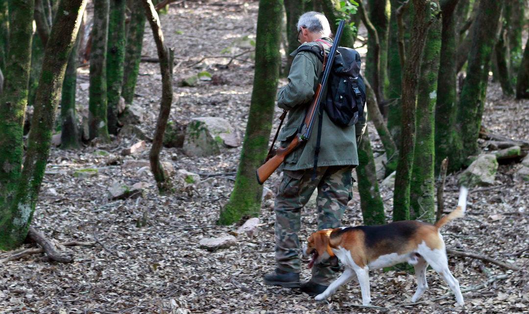 Chasse en Forêt Domaniale de Sarreguemines