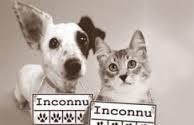 Capture de chiens et chats errants par un particulier