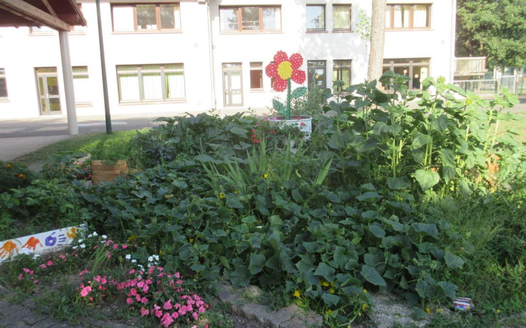 Le jardin pédagogique a permis de belles récoltes