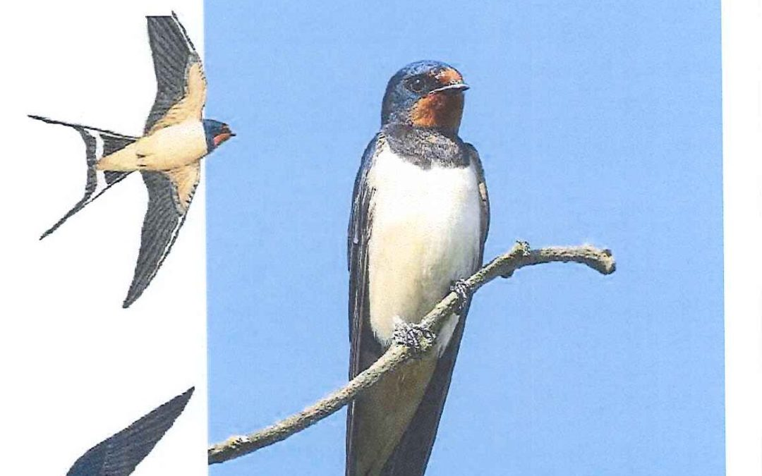 Ligue pour la protection  des Oiseaux Moselle