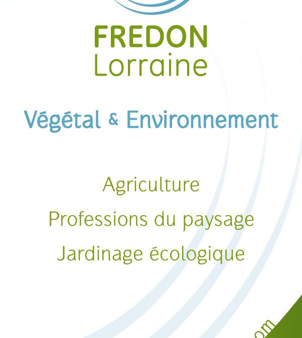 Information Frelon asiatique FREDON Lorraine